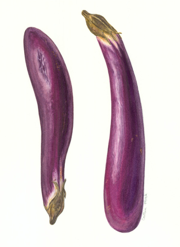 Eggplant / Watercolor